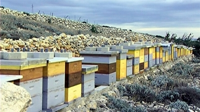 BESPLATNA EDUKACIJA ZA PČELARSTVO