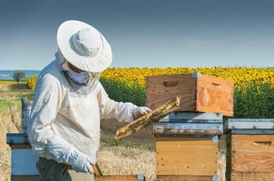 Objavljen pravilnik o provedbi mjera Nacionalnog pčelarskog programa 2017.-2019.