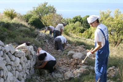 Obnova suhozida u Drašnicama