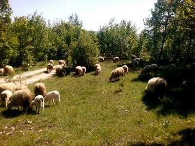 Još sredstava za male poljoprivrednike zahvaljujući LAG-u ADRION!