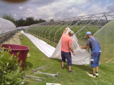 """Podmjera 6.1. """"Potpora za pokretanje poslovanja mladim poljoprivrednicima"""""""