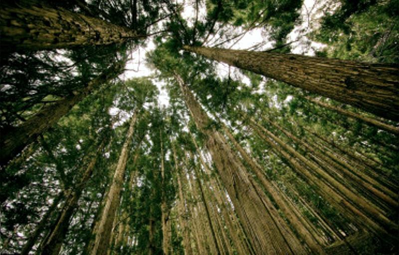 LAG ADRION – naše prve prijave gospodarstvenika iz područja šumarstva, ali i šumske infrastrukture
