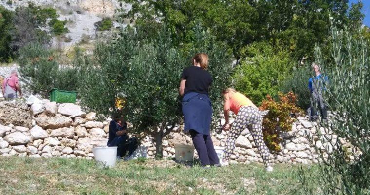 Nakon Dugog Rata, o financiranju projekata i u Omišu – Obiteljsko poljoprivredno gospodarstvo Kovačić Vanda
