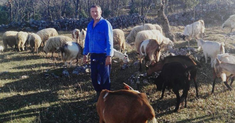 """Primjer dobre prakse s 2. nacionalnog natječaja podmjere """"Potpora razvoju malih poljoprivrednih gospodarstava"""" – OPG Balić Ivan"""